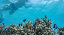 TAI Sea Scooter Snorkel, Cook Islands, Snorkeling