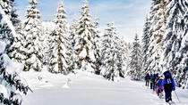 Snowshoe Through Vancouver's Winter Wonderland, Vancouver, Half-day Tours