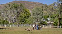 Yura Udnyu - Wilpena Pound Aboriginal Cultural Walk, South Australia