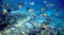 Day Trip from Punta Cana: Catalina Island and Altos de Chavon, Punta Cana, Day Cruises
