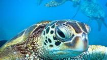 Mala Xpress Snorkel, Maui, Snorkeling