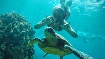 West Maui Snorkeling Adventure, Maui, Snorkeling