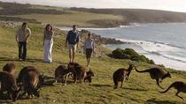 Small Group Kangaroo Island Discovery Tour
