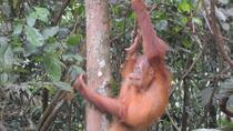 3 days Medan Orangutan Bukit Lawang, Medan, Private Sightseeing Tours