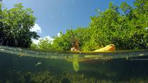Magic Mangrove Paddle in Beef Island Lagoon, British Virgin Islands, Stand Up Paddleboarding