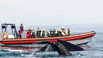 Whale Watching RIB Boat Tour from Husavik, North Iceland, Dolphin & Whale Watching