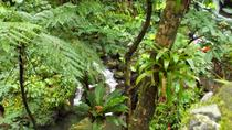 St Kitts Rainforest Tour, St Kitts, Nature & Wildlife
