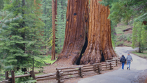 Todagerstur fra San Francisco til Yosemite nasjonalpark, San Francisco, Multi-day Tours