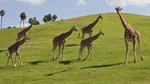 Theme Park Transportation: San Diego Safari Park, Anaheim & Buena Park, Theme Park Tickets & ...