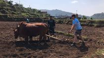 Exclusive Exposure to Learn Ancient Rural Farming near Pokhara Valley, Pokhara, 4WD, ATV & Off-Road ...