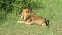 3-Day Luxury Uganda Safari- Murchison Falls National Park, Kampala, Multi-day Tours