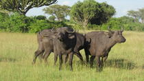 3-Day Queen Elizabeth National Park Safari Tour, Kampala, Multi-day Tours