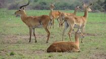 8-Day African Safari Tour- Uganda Safari, Uganda, Multi-day Tours
