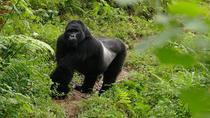 Gorilla Tracking Day Tour from Kabale, Kampala