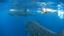 10-Day Wildlife Adventure Tour from Cancun, Cancun, Multi-day Tours