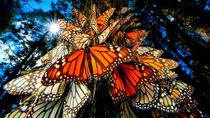 6-Night Monarch Butterfly Migration from Mexico City, Mexico City, Multi-day Tours