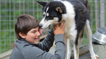 7-Day All Inclusive Summer Break at a Husky Farm in Kuhmo, Eastern Finland