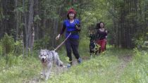 Husky Trekking Tour in Kuhmo, Eastern Finland, Nature & Wildlife