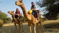 Chandigarh Private Day Trip from New Delhi Including Camel Ride, New Delhi, Private Day Trips
