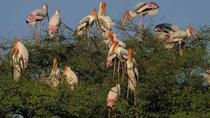 Private Day Trip to Keoladeo National Park from New Delhi, New Delhi, Private Day Trips