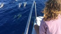 Sea Life & Whale Watching Half Day Tour, Ponta Delgada, Day Cruises