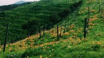 Private Group Wine Hike, Malibu, Hiking & Camping