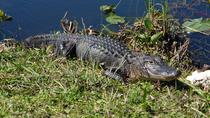 Everglades Airboat Ride And Wildlife Nature Show From Miami, Miami, Airboat Tours