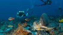 2-Tank Morning or Afternoon Dives in Playa del Carmen, Playa del Carmen, Scuba Diving