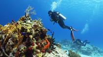 Cozumel Express 2-Tank Dives from Playa del Carmen, Playa del Carmen, Scuba Diving