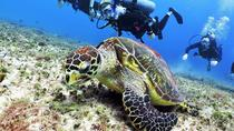 Discover Scuba Diving Course in Playa del Carmen, Playa del Carmen, Scuba Diving