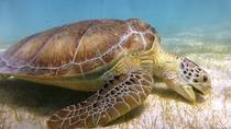 Turtles and Cenote Snorkeling in Riviera maya, Playa del Carmen, Snorkeling