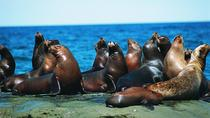Excursion to Punta Loma, a Sea Lion Colony from Puerto Madryn, Puerto Madryn, Day Trips