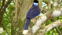 Iguazu Falls: Visit to Brazilian Side with Birds Park and Itaipu Dam, Puerto Iguazu, Day Trips