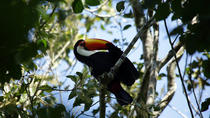 Yacutinga Lodge - Birds of the Jungle, Puerto Iguazu