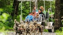 Kennel Tour and Dog Sled Ride, Seward, Cultural Tours