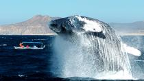 Cabo Whale-Watching Tour, Los Cabos, Dolphin & Whale Watching