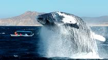 Cabo Whale-Watching Tour with Lunch, Los Cabos, Day Cruises