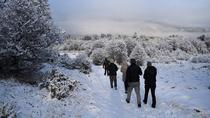 Winter Full Day: National Park plus Beagle Channel Navigation, Ushuaia, Nature & Wildlife