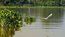 Mekong Delta full day by speed boat, Ho Chi Minh City, Jet Boats & Speed Boats