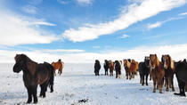 Golden Circle & Horseback Riding, Reykjavik, Horseback Riding