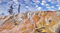 Yellowstone Nature and Wildlife Upper Loop Guided Tour from Cody Wyoming, Yellowstone National ...