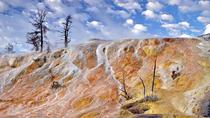 Yellowstone Upper Loop Tour von Cody Wyoming, Yellowstone National Park, Full-day Tours