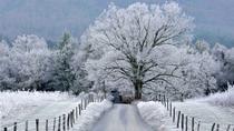 Gatlinburg's Christmas in the Cove Tour, Gatlinburg, Bus & Minivan Tours