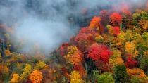 Smoky Mountain Trees of Many Colors Tour, Gatlinburg, Nature & Wildlife
