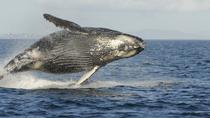 Victoria Whale Watch Tour