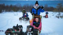 Drive a Husky Sled in Tromso, Tromso, Ski & Snow
