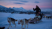 Evening Husky Sled Ride in Tromso, Tromso