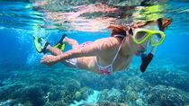 Florida Keys Snorkeling Tour, Islamorada, Snorkeling