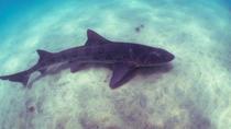 Leopard Shark Snorkel Tour in La Jolla, San Diego, Snorkeling