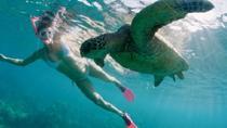 Sea Turtle and Dolphin Snorkeling Adventure, Oahu, Snorkeling